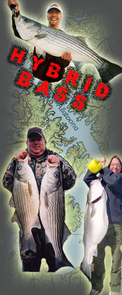 Fishing Lake Allatoona With Fred Duncan Lake Allatoona Fishing Guide